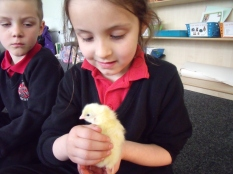 Maya held the chick very gently.